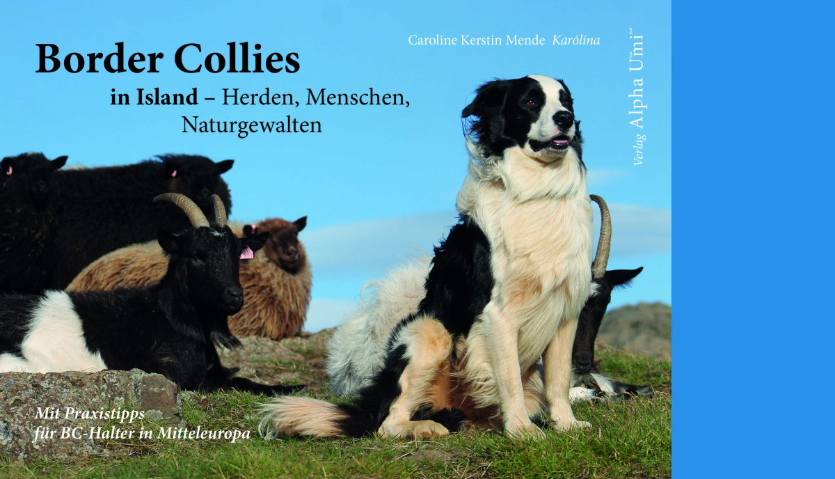 Internet blau 1512 Border Collies Titel